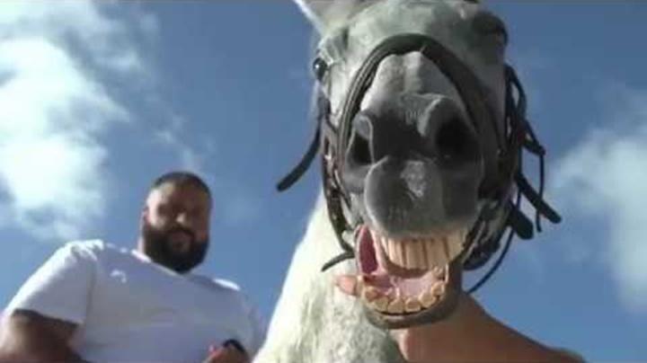 Dj Khaled acusado de matar un caballo en el rodaje de un videoclip